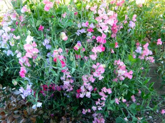 Each petal has a transitional color.
