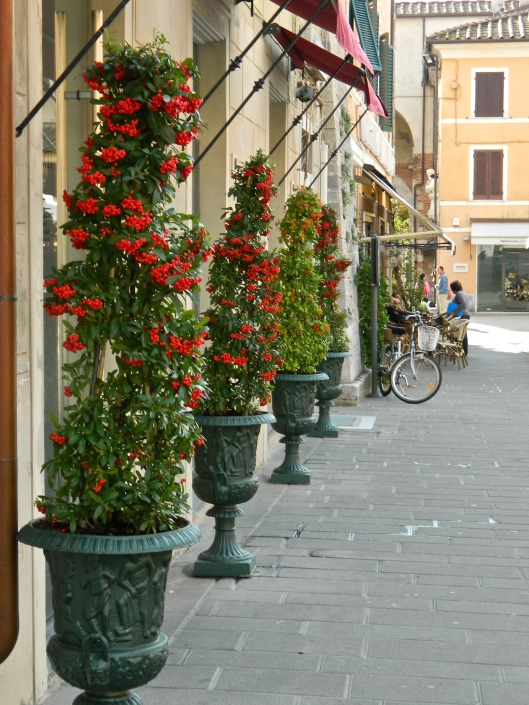 Brilliant reds lining the streets of Pietrasanta.