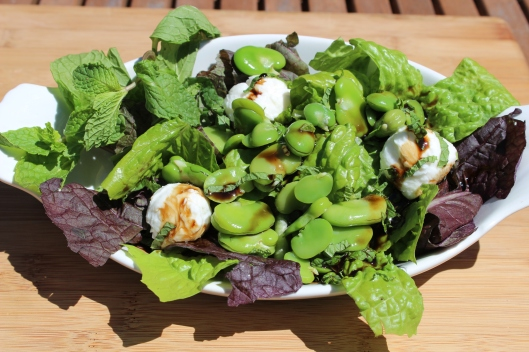 A bed of my garden greens, favas tossed with mint and a hint of olive oil, a few mozarella balls then drizzed with fig balsamic vinegar. Benissimo!