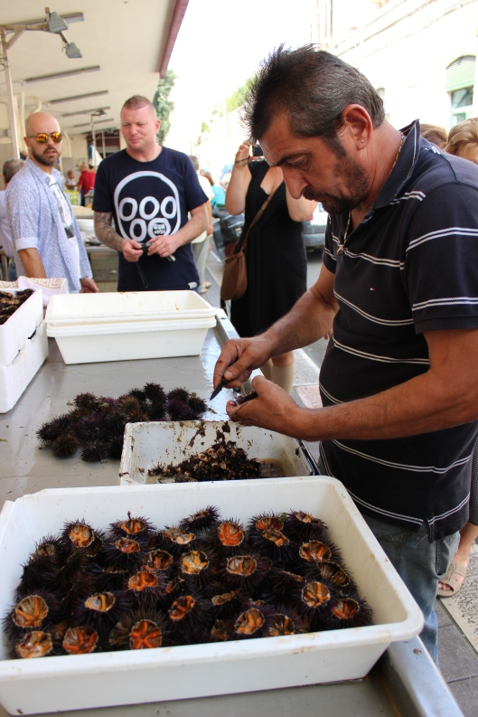 Scooping out the sea urchins' delicacies.