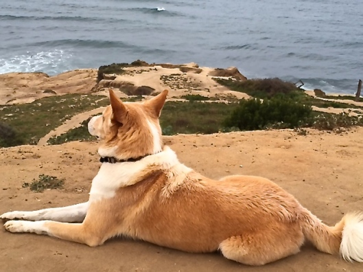 Sparky enjoying a few moments of reflection at his favorite spot.