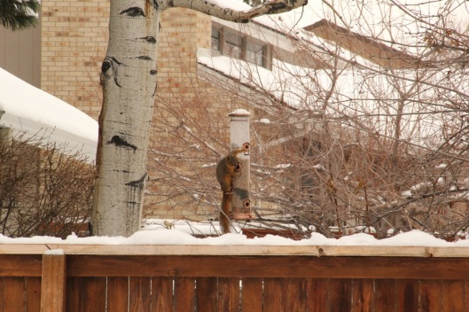 Denver squirrel