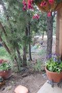 The garden.